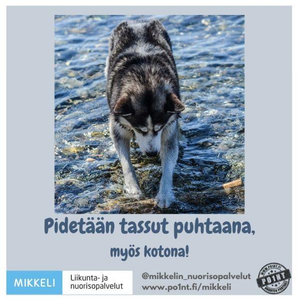 (kuva jossa koira pesee tassuja järvessä) Pidetään tassut puhtaana, myös kotona!
