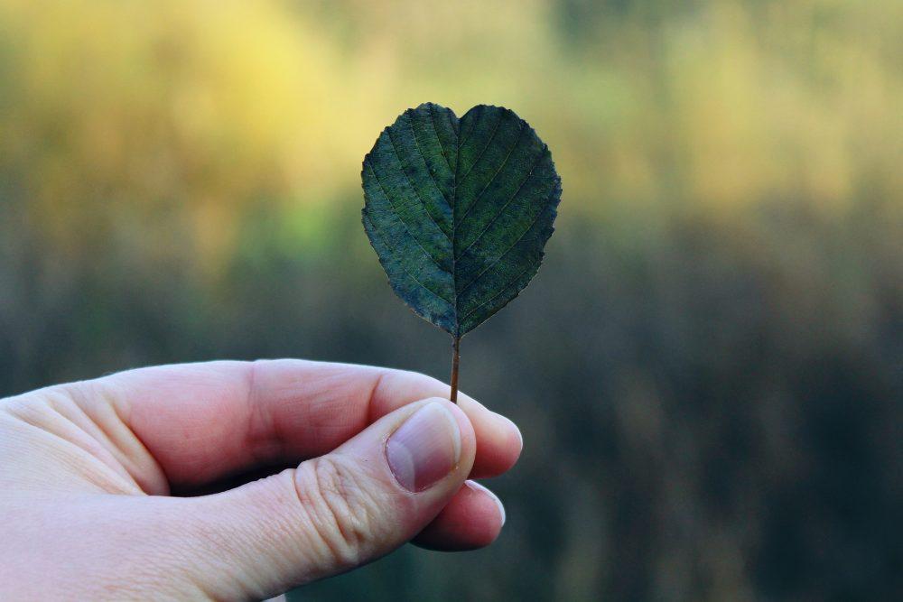 Ihminen pitelee sormissaan sydämen muotoista puunlehteä.