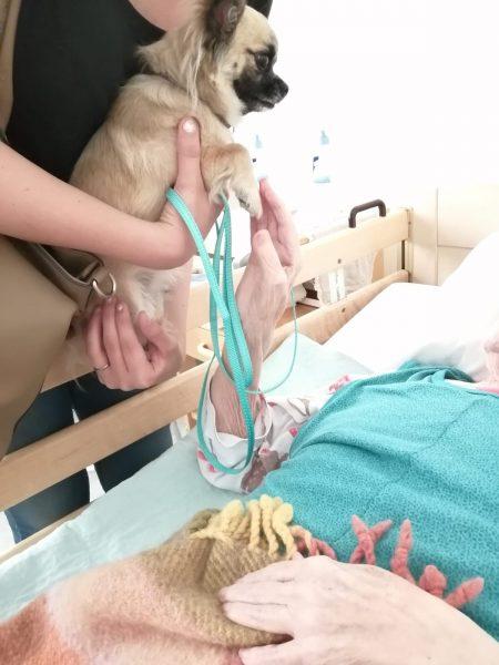 Vuoteessa potilas. Sängynlaidalla pieni vaalea koira.